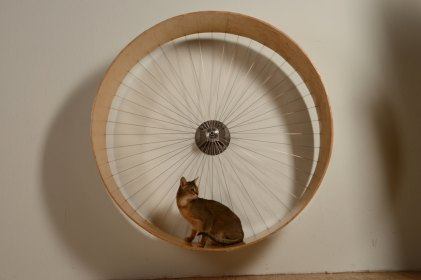 Roue pour chat HolinDesign 850€
